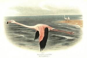 65/2285   [Ornithology]. Oort, E.D. van.