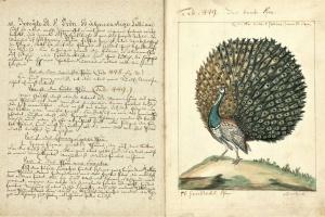 67/2610   [Ornithology]. Vögel in Beschreibungen und Abbildungen nach dem