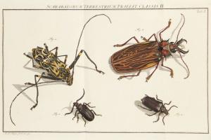 68/2689   [Entomology]. Rösel van Rosenhof, A.J.