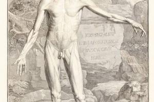 69/2491   [Anatomy]. Albinus, B.S.