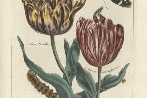 69/2539   [Botany]. Nederlandsch Bloemwerk. Door een gezelschap geleerden.