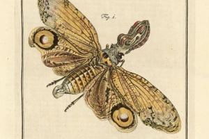 69/2558   [Entomology]. Rösel van Rosenhof, A.J.