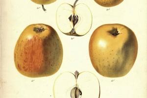 70/2487   [Botany]. Berghuis, S.