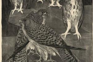 70/3735   Hoytema, Th. van (1863-1917).