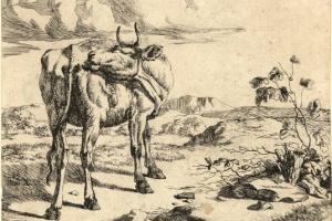 70/5556   Laer, P. de (1592-1642).