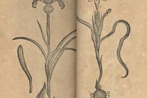 70/2490   [Botany]. Dodonaeus, R.