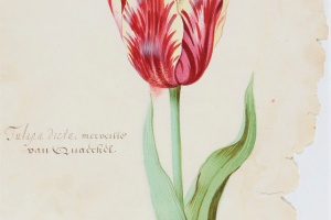 71/5319   [Flowers]. Marrel, J. (1614-1681)/ Holsteyn II, P. (1614-1673/87) (circle of).