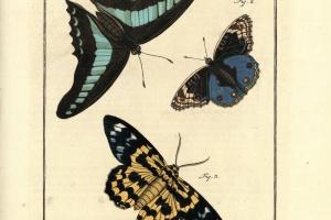 71/2122   [Entomology]. Rösel van Rosenhof, A.J.