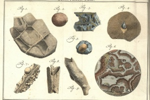 72/2268   Linnaeus, C.