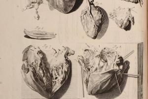 74/2101   [Anatomy]. Bidloo, G.