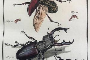 74/2150   [Entomology]. Rösel van Rosenhof, A.J.
