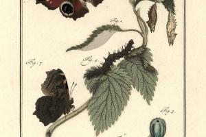 75/2221   [Entomology]. Sepp, J.C./ Snellen van Vollenhoven, S.C., Snellen, P.C.T. and Brants, A.